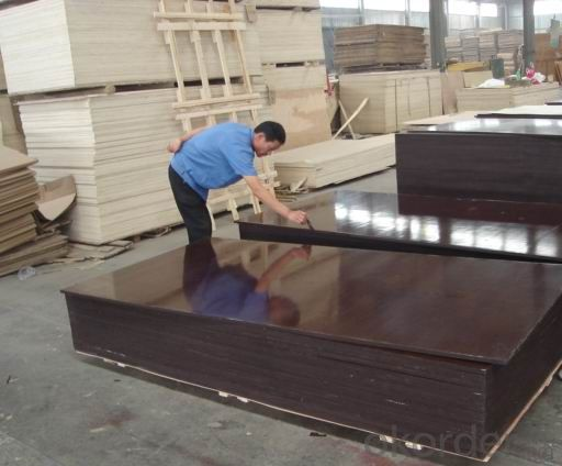 Plywood for Construction 1220X2440mm Factory Price