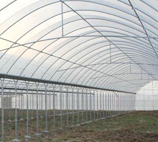 Multispan Tunnel Greenhouse for Strawberry Grape Raspberry