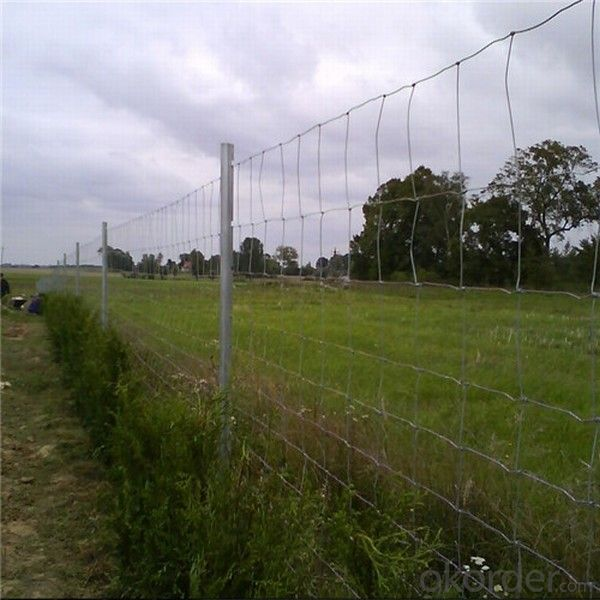 Cattle Fence For The Farm To Protect the cattle