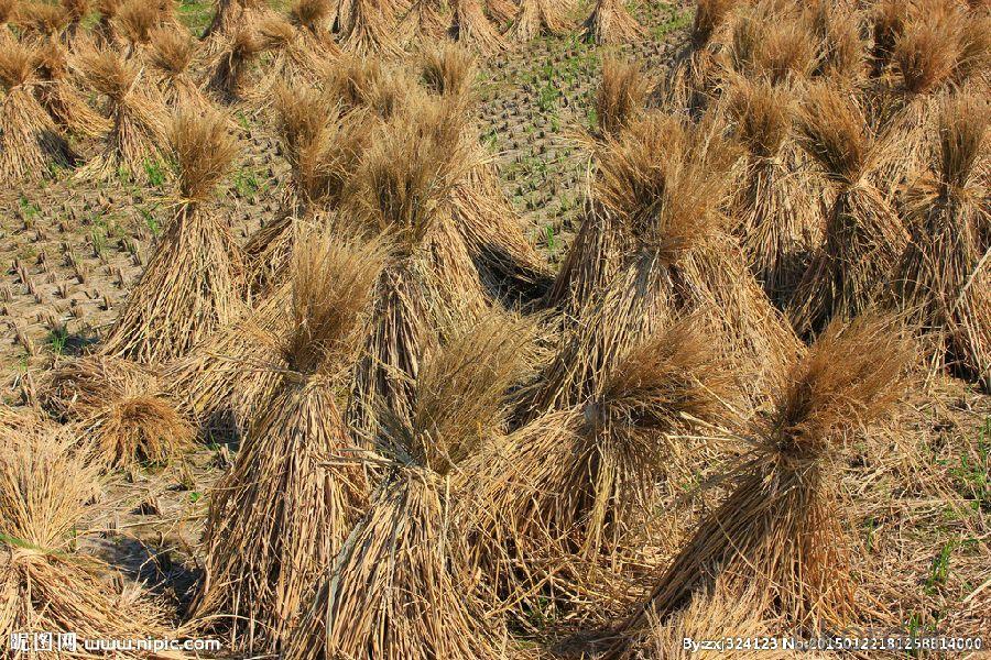 Biomass Pellet  Made by grass  calorific value 3900~4800 Kcal /kg