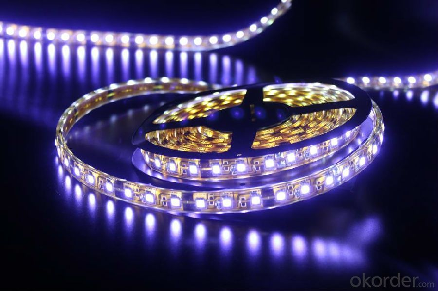 40V 240LEDS/Meter 3014 Led Strip Light