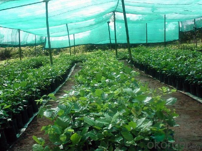 Agricultural Shade Net with Black Color / Malla Sombra HDPE / Sombra Neta 100% de HDPE con UV
