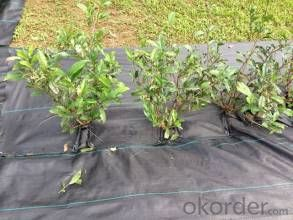 Uv-Cut Spunbonded Polypropylene Nonwoven Fabric For Weed Control Mat