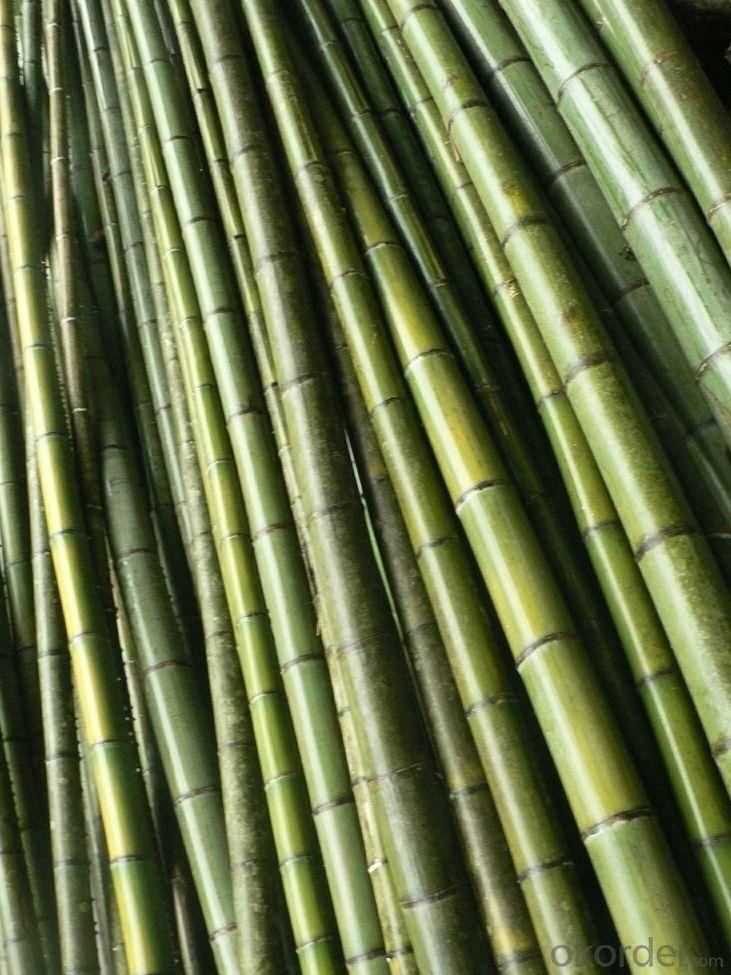 Natural Bamboo Sticks Natural Bamboo Stick