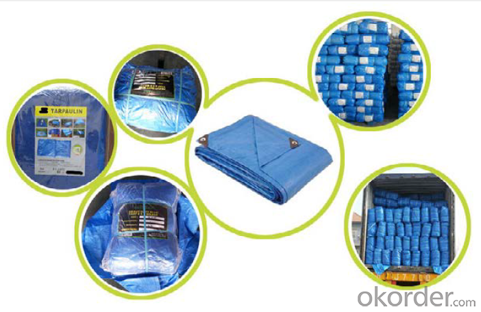 ISO Standard PE Tarpaulin for Waterproof
