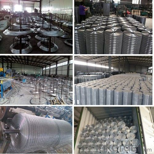 Electro Galvanized Welded Wire Mesh (XA-400)