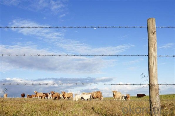 Double Twist Iowa Galvanzied Barbed Wire