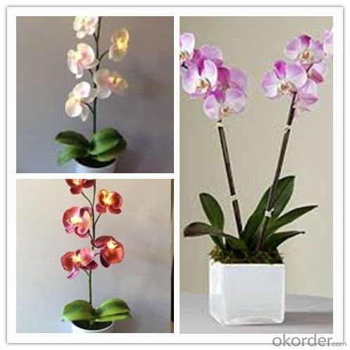 Butterfly Orchid Solar Flower Garden Light  Factory Direct