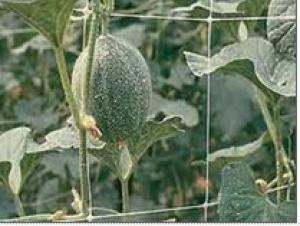 Plant Support Net Anti bird Net Extruded Grape Net