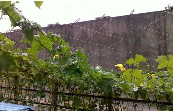 Plant Support Net for vegetable cucumbe