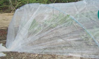 Anti-insect Net-110g