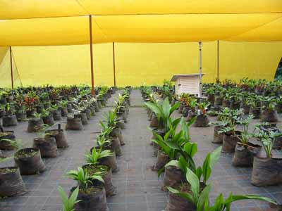 Ground Cover-120g