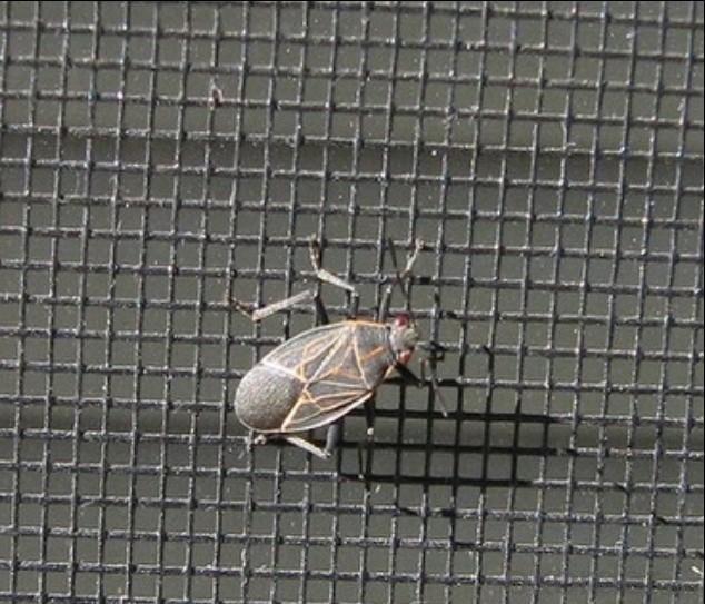 Fiberglass Insect Screening Mesh 18*16/115g Factory Direct Sale