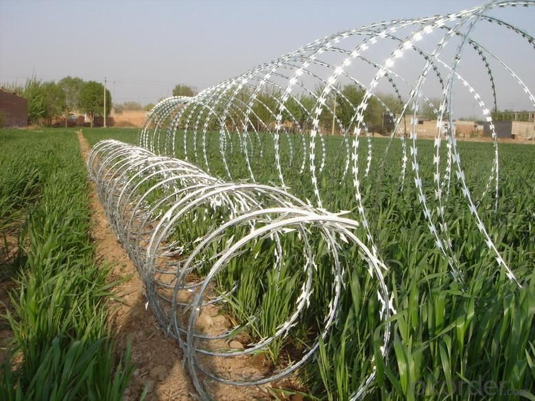 Stainless Steel Razor Wire with High Quality