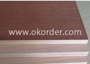 Sapeli Face Plywood