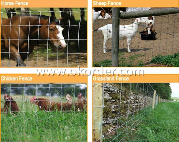 Knotted Wire Mesh Fence