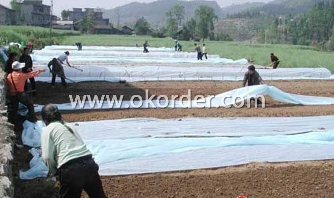 PLA Spunbond Nonowven Fabric