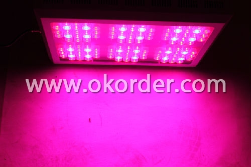 Led UV Plant Light