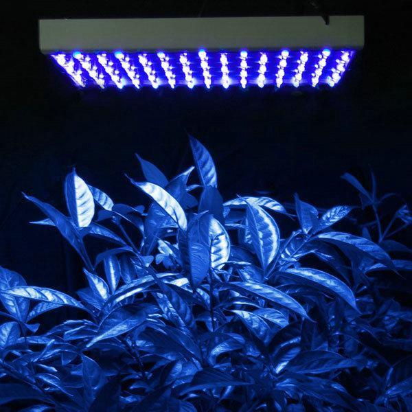 LED Low Power Grow Light  White 10000K:113pcs OEM 14Watt