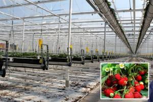 Special glass greenhouse  Reflective glass 3.2-2100*1500