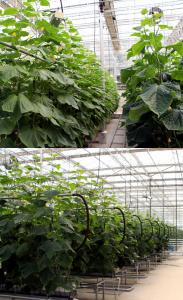 Special Glass Greenhouse  Reflective Glass 5.0-2000*1500