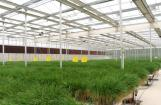 Special glass greenhouse  Reflective glass 3.2-2000*1000