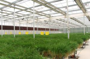 Special glass greenhouse  Reflective glass 3.2-400*400