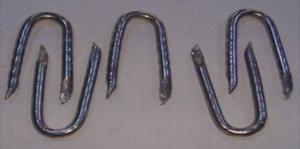 Galvanized U Staple Nails Manufactory with Good Quality