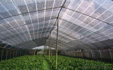PE Plastic Sunshade Net with Virgin Materials