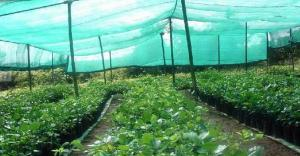 Sunshade Net f Shade Cover Safety Net Scaffolding Net Construction Net or Argriculture and Construction