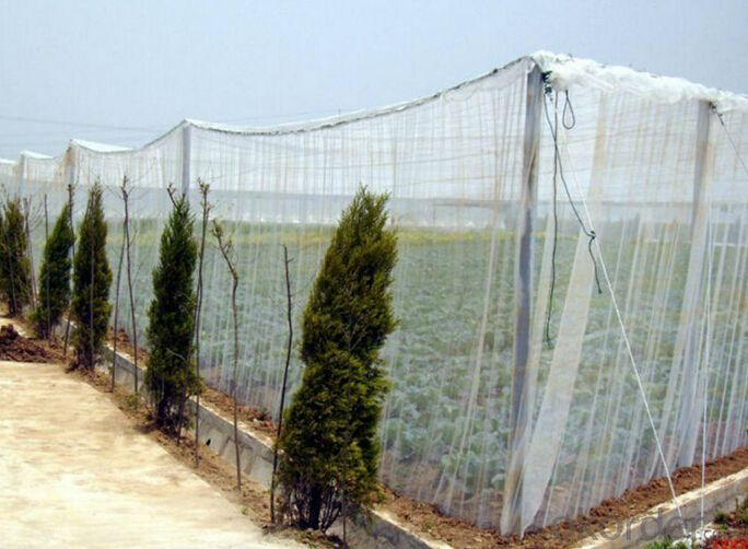 Anti Insect Net Mosquito Net