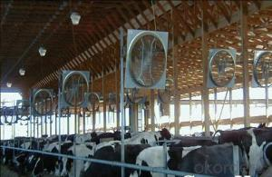 Energy Saving Cow-house Exhaust Fan