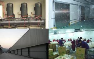 Discontinuous or continuous pu sandwich panel production line
