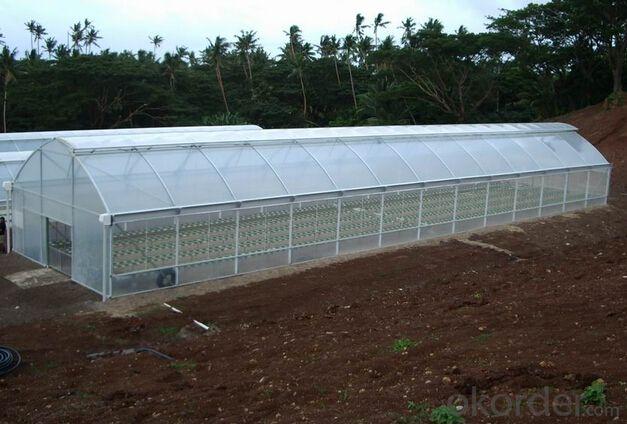 European style Multi span film greenhouse