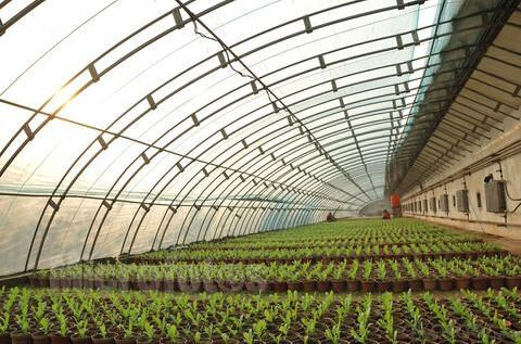 Economical film greenhouse manufacturer for agriculture