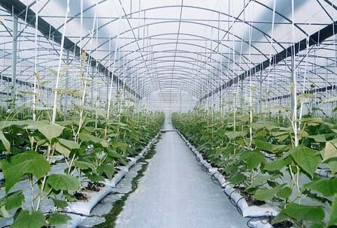 Commercial plastic greenhouse supplier for plant