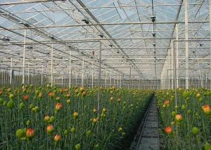 Economical Glass Sheet Greenhouses for Flowers