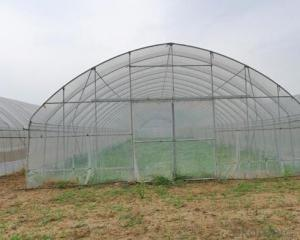 Hot sales PE film greenhouse for vegetable grow