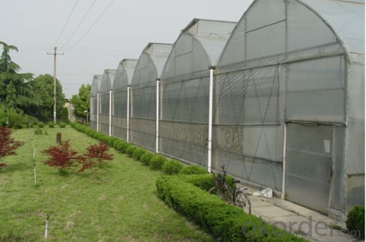 Multi span vegetable greenhouse for sales