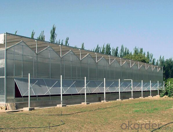 Cheap and hot sales glass greenhouse for vegetable