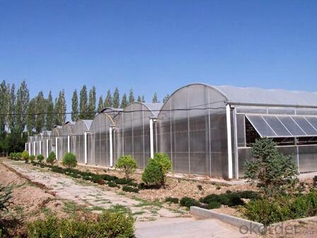 Large span glass greenhouse for vegetable