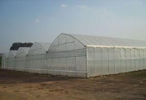 Economical PE film greenhouse for agriculture