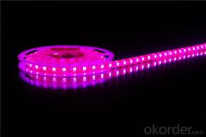 12V Flexible LED strip light waterproof