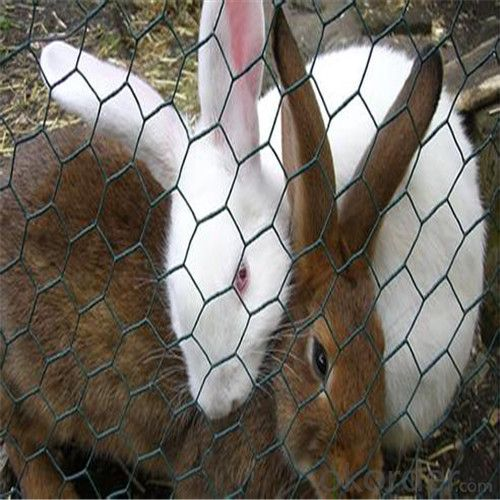 Hexagonal Wire Mesh Fence Chicken, Poultry, Rabbit and Other Animals