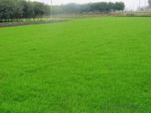 Nutrition Geotextile for Planting Grass