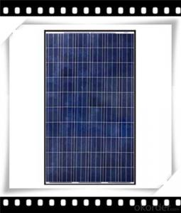 240W Poly solar Panel Medium Solar Panel Newest Solar Panel CNBM
