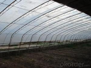 Multispan Tunnel Greenhouse for Agricultural Film