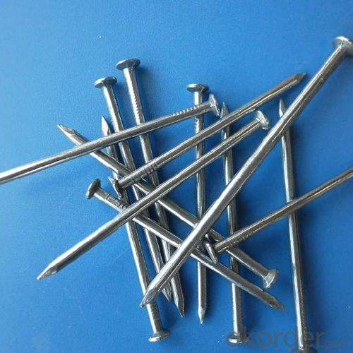 Common Nails with Good Quality Iron Common Nail with Best Price