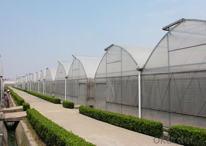 Multispan Tunnel Greenhouse for Strawberry Grape Raspberry Agricultural Green Houses