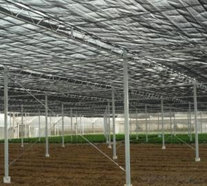 Single Span Greenhouse for Vegetable Fruits Agricultural Greenhouses